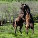 Horse Shinanigans by salza
