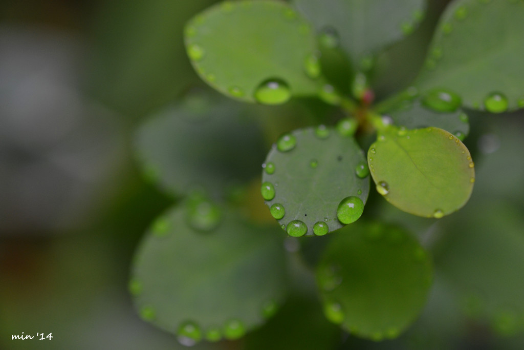 Studded Leaves by mhei