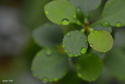 13th Sep 2014 - Studded Leaves