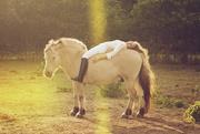 15th Sep 2014 - The Horse!