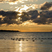 Geese in the morning by mccarth1