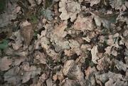 16th Sep 2014 - Leaves