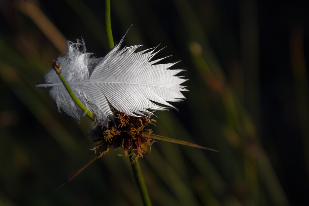 Lost feather by gosia