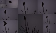 16th Sep 2014 - Everything's Owl-Right