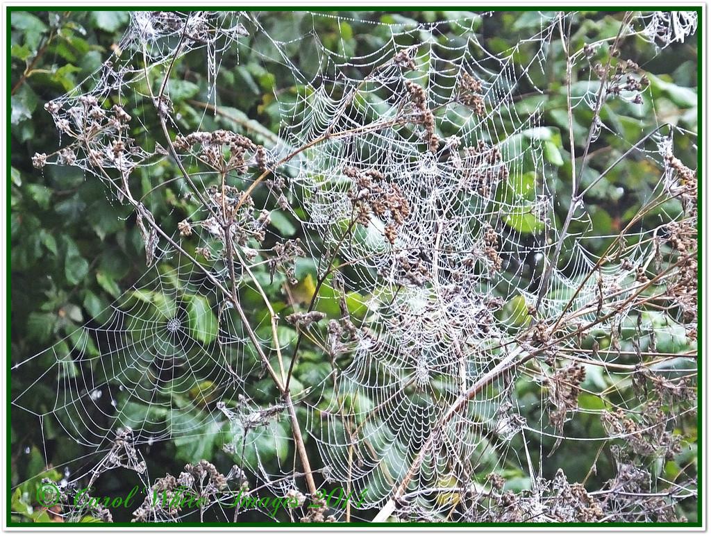 O,What A Tangled Web We Weave... by carolmw
