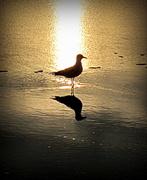 17th Sep 2014 - Early bird---:)