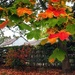 Lovely September by happypat
