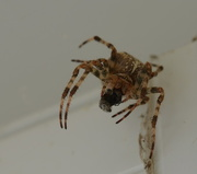 18th Sep 2014 - Said the Spider to the Fly