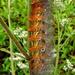 More Fluff than Caterpillar by milaniet