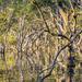 Mangroves6