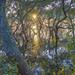 Mangroves7