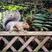 Cheeky squirrel