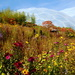 Wild flowers at the Eden Project by busylady