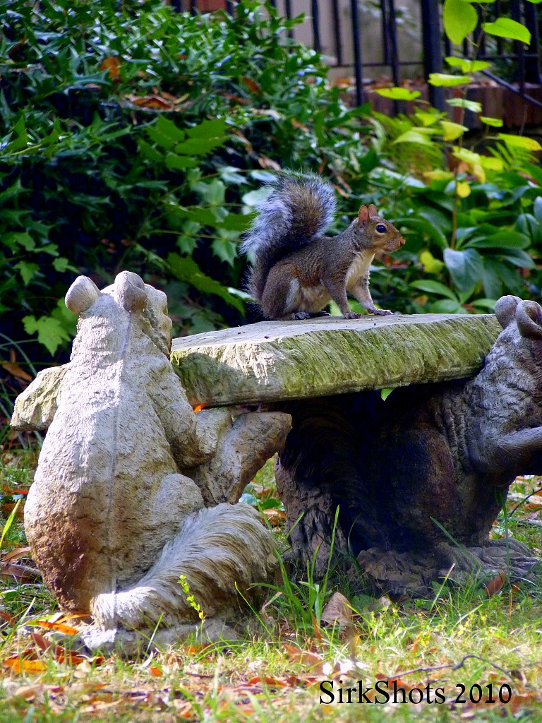 A Squirrel on a Squirrel Bench by peggysirk