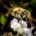 Buzzing - 22-09 by barrowlane