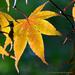 Good bye summer, hello autumn by mccarth1