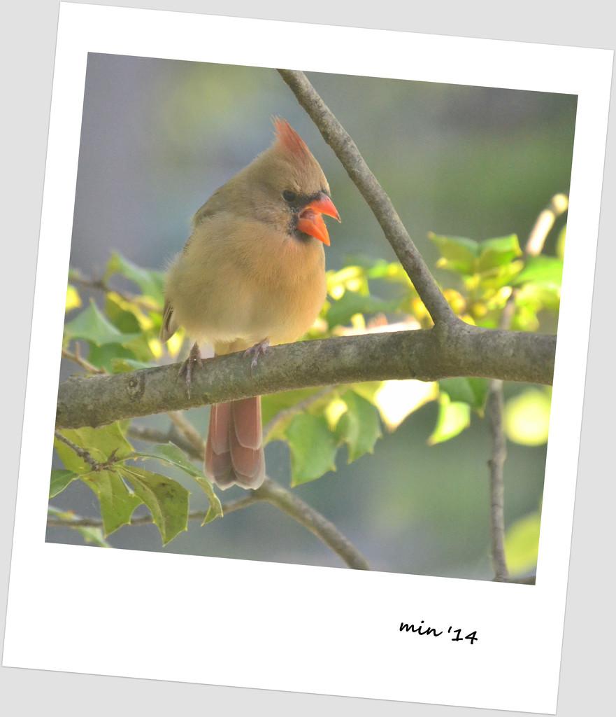 Angry Bird by mhei