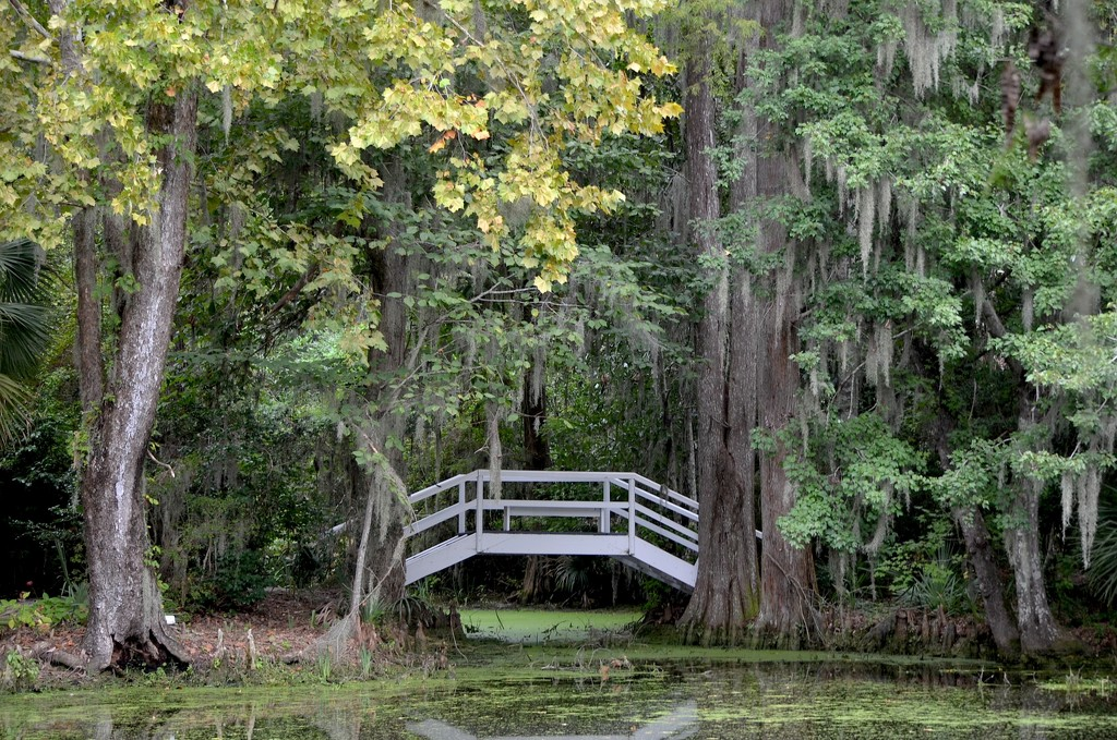 Hints of Autumn at Magnolia Gardens, Charleston, SC by congaree