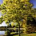 Fall meets golden hour by joansmor
