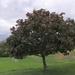 My tree in September
