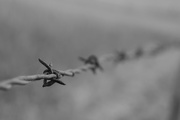 24th Sep 2014 - Barbed wire