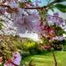 blossom - going...going...
