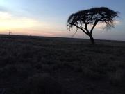 25th Sep 2014 - Kenyan sunset