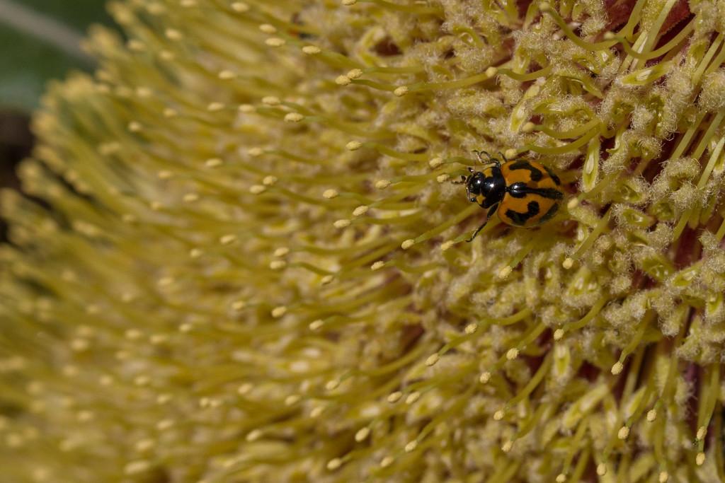 Ladybird by gosia