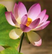 27th Sep 2014 - Lotus