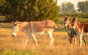 27th Sep 2014 - Darlin' Donkeys