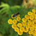 Yellow and Bee by nanderson