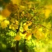 Leaves of Gold by suelbiz47