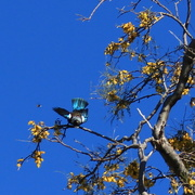 25th Sep 2014 - Flight of the Tui