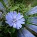 Radiant little flower