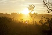 29th Sep 2014 - Gorgeous morning!