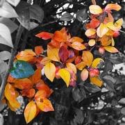 30th Sep 2014 - Colours