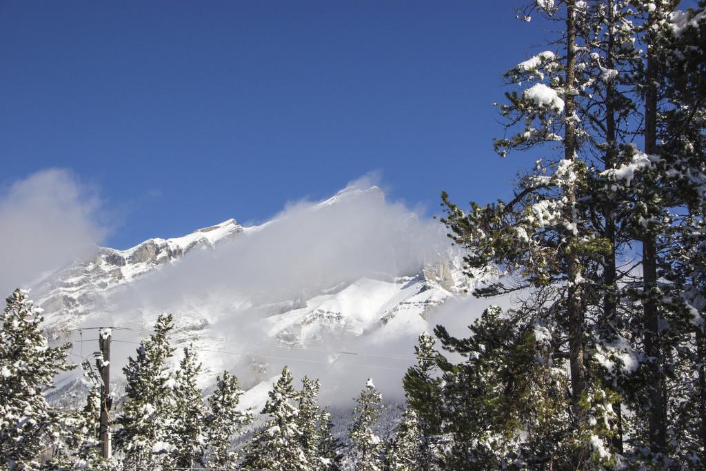 Winter Wonderland by shepherdman