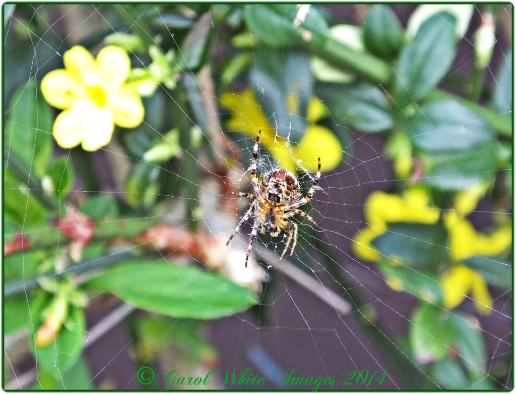 Yuk!! Not My Favourite Bug by carolmw