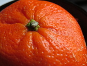 1st Oct 2014 - O is for...Orange