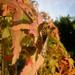 Enjoying the Autumn sun