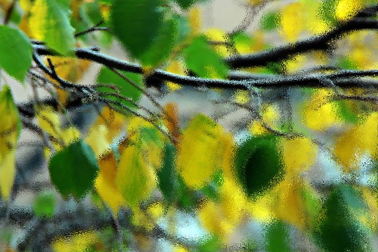 autumn leaves by summerfield