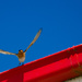 It's a BIRD FEST! by gigiflower