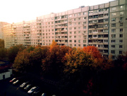 2nd Oct 2014 - Autumn Leaves
