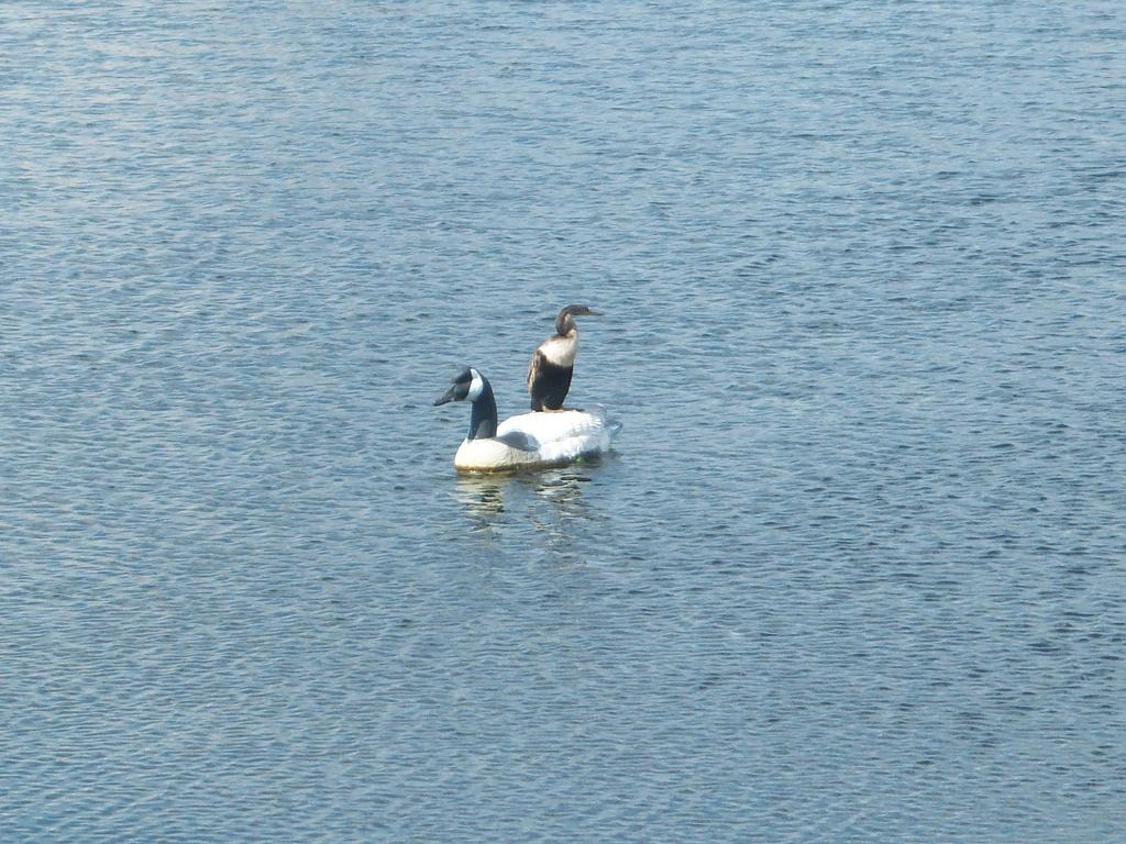 Ducks by bruni
