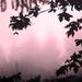 Misty Morning by nanderson