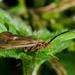Riverside bug - 3-10 by barrowlane