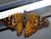 3rd Oct 2014 - Indoor Butterfly