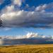 empty pastures by aecasey