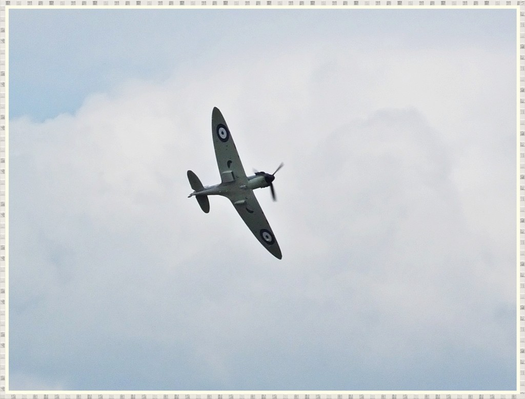 Spitfire by carolmw