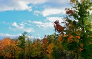 5th Oct 2014 - Fall Palette